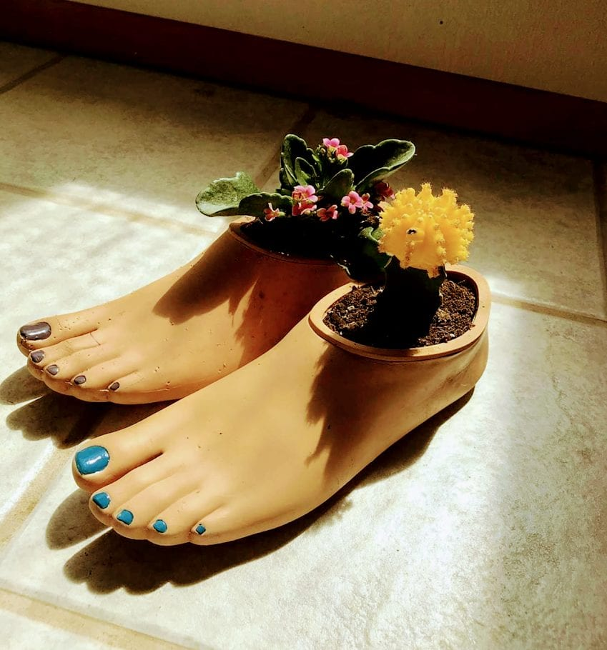rubber feet with a flowering plant